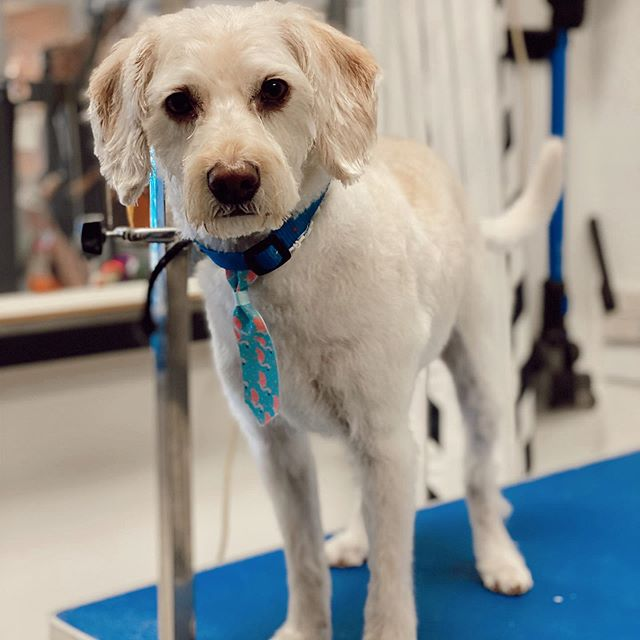 Off the Leash Pet Grooming and Dog Daycare, Regina Sask